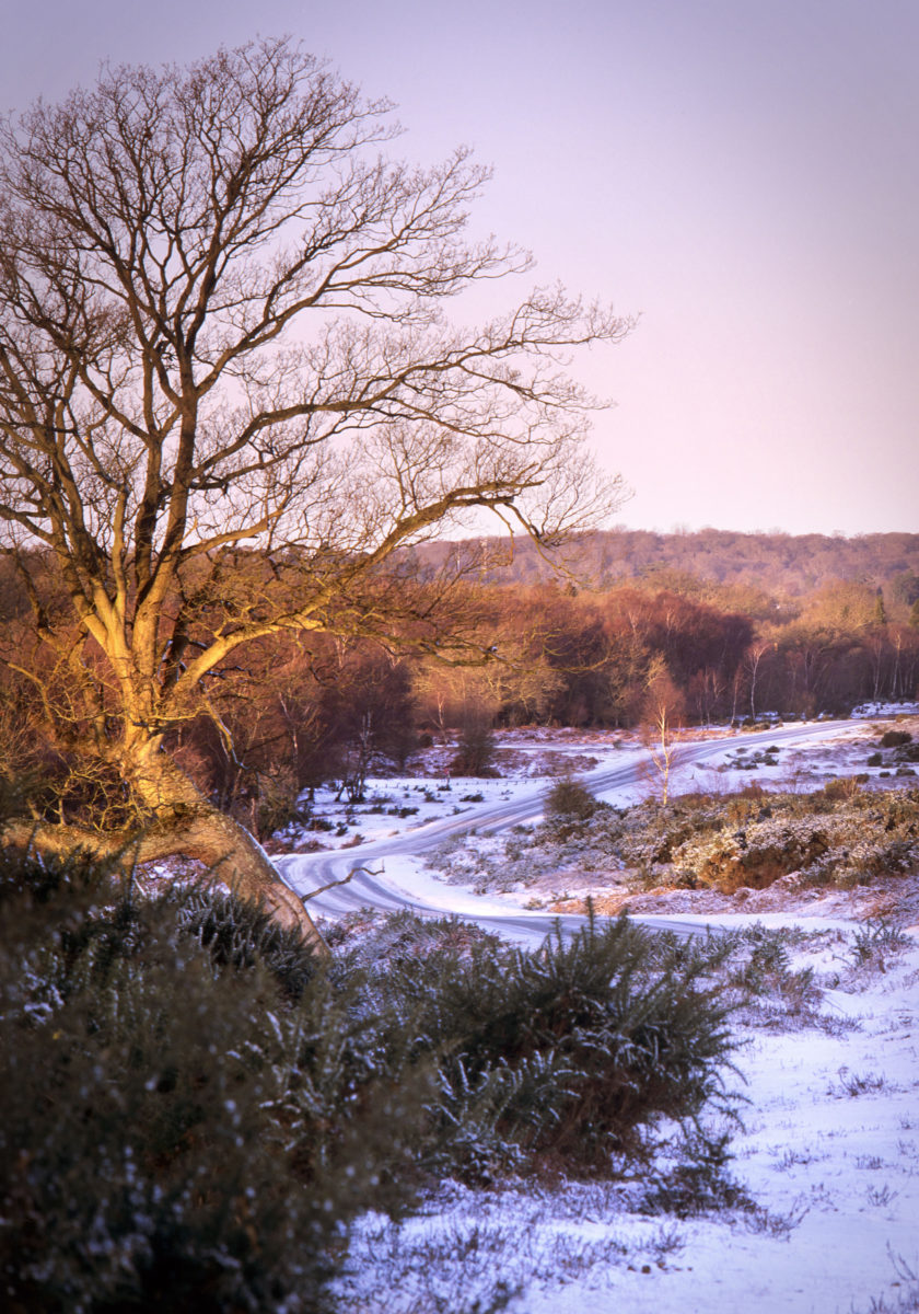 Ten Things To Do In The New Forest In Winter Deep South Media